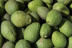 hass-avocado-2972616_1_1040x780