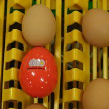 wireless-egg-on-conveyor2 1980x1080