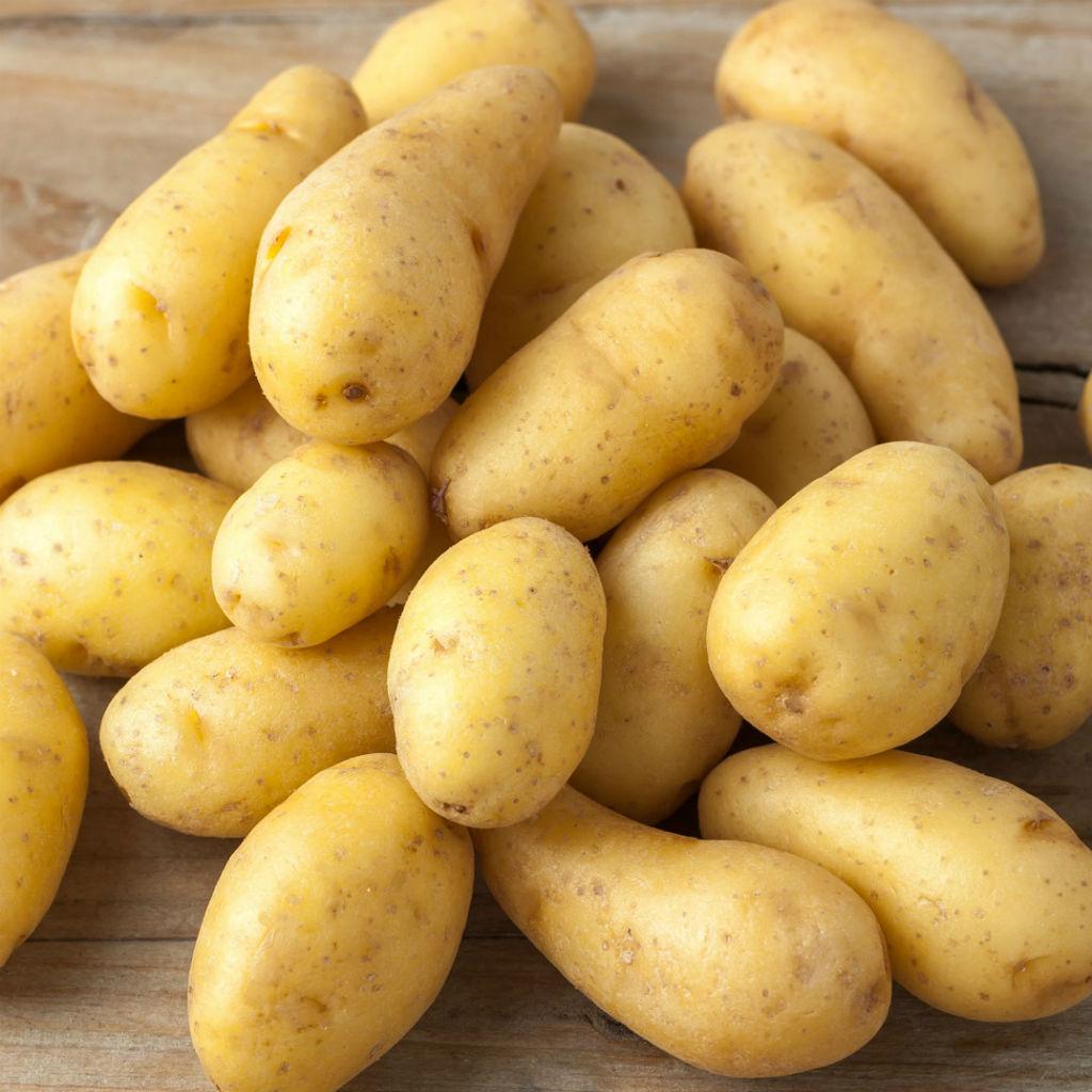 potato1024x1024